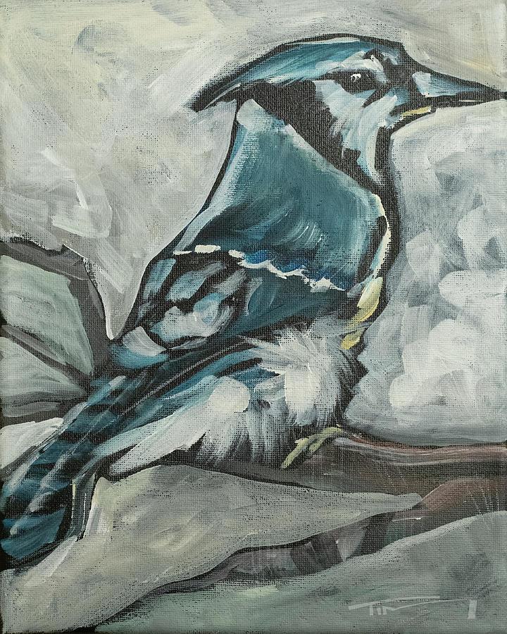 bluejay by Tim Nyberg