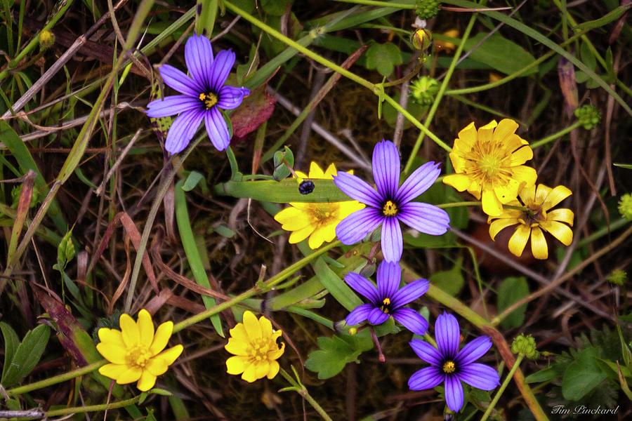 Blue,Yellow and Green -- beautiful by Timothy Pinckard