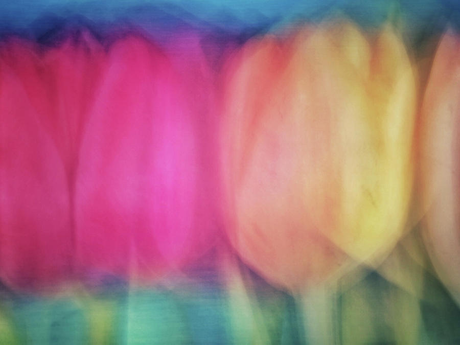 Blurred tulip flower like abstract background with pinks, yellows, greens and peach colors by Teri Virbickis