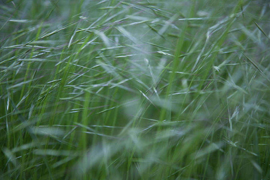 Blurry Wheat by Maria Heyens