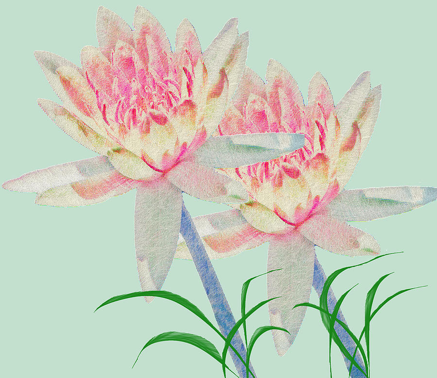 Water Lilies Mixed Media - Blush Of Pink by Rosalie Scanlon