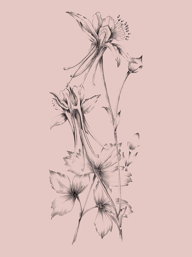 Flower Mixed Media - Blush Pink Flower  by Naxart Studio