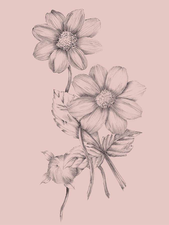 Flower Mixed Media - Blush Pink Flower Sketch by Naxart Studio