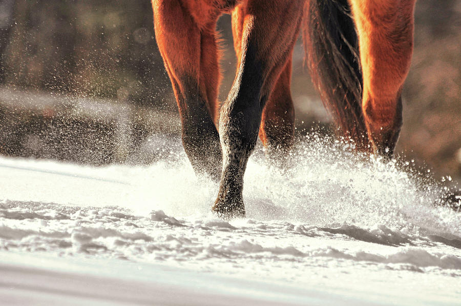 Horse Photograph - Blustery Trot by JAMART Photography
