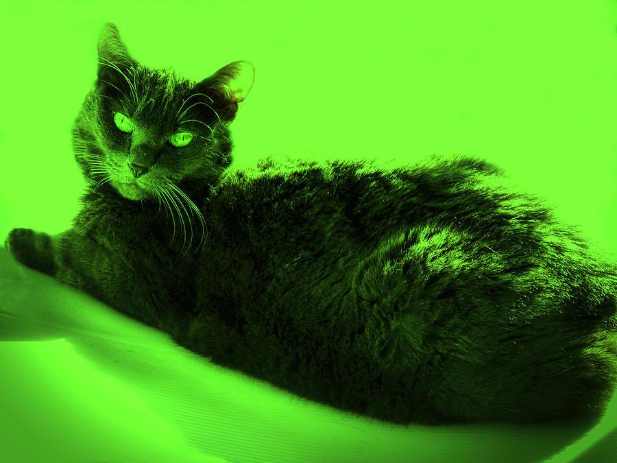 Bluz in Green by Judy Kennedy