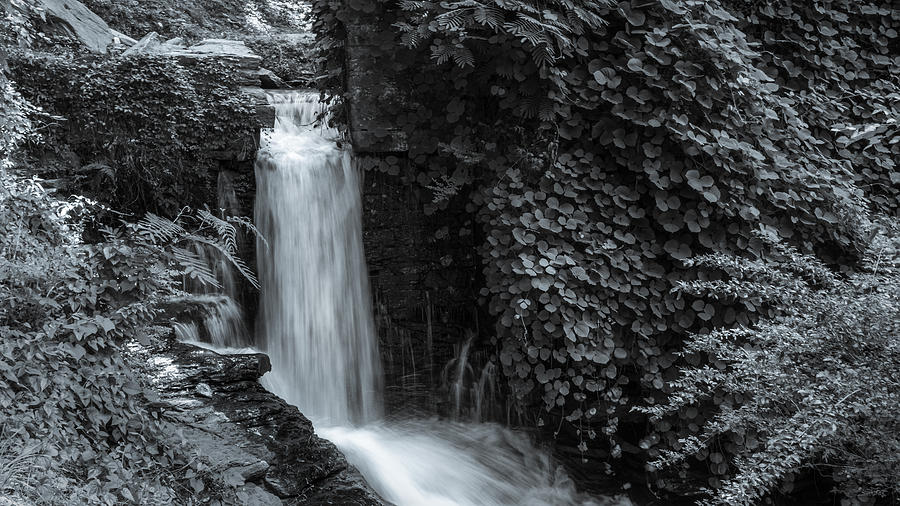 BNW Waterfall and Flora by Keith Smith