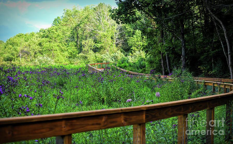 Boardwalk Along the Huckleberry Trail by Kerri Farley