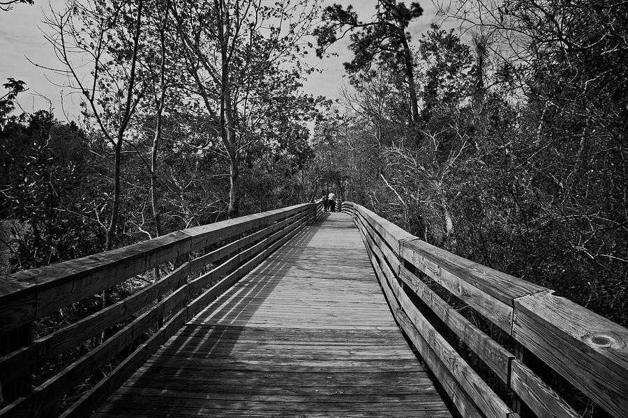 boardwalk at Bellingraph Gardens. by Timothy Pinckard