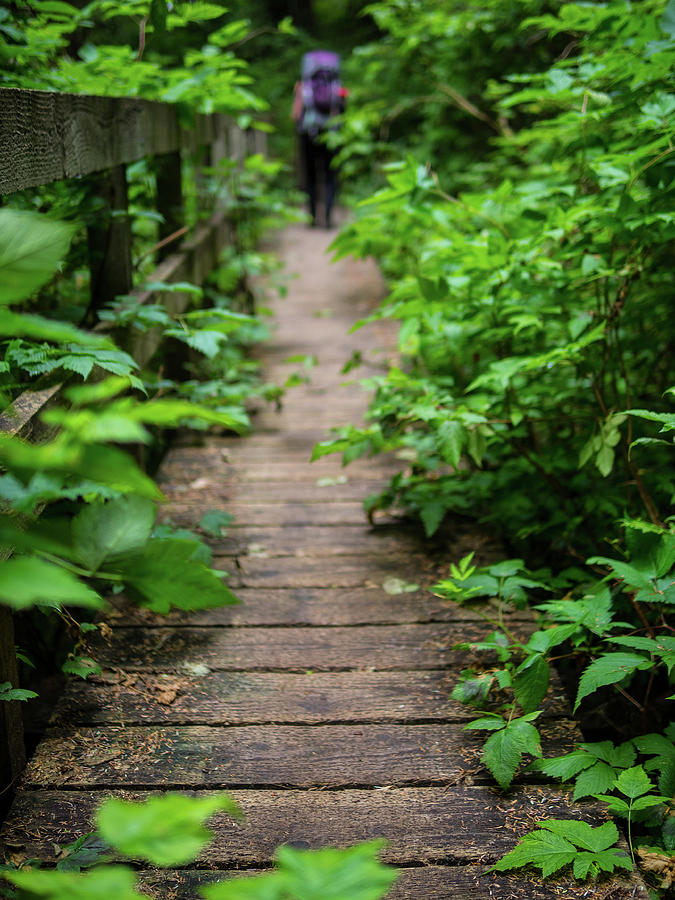 Hiking Photograph - Boardwalk by Curtis Patterson