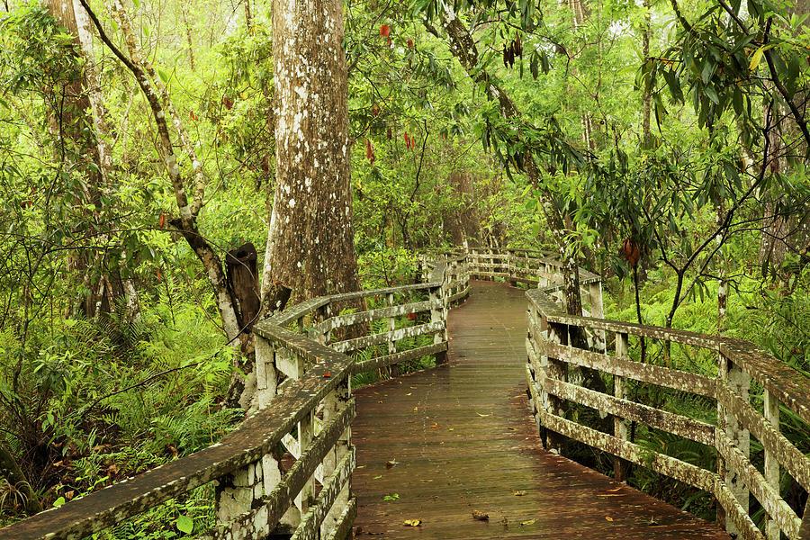 Adam Jones Photograph - Boardwalk Through Swamp And Bald by Adam Jones