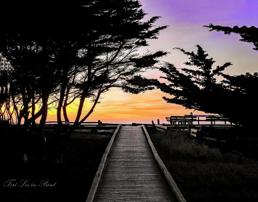 Boardwalk to the Sunset by Teri Lee