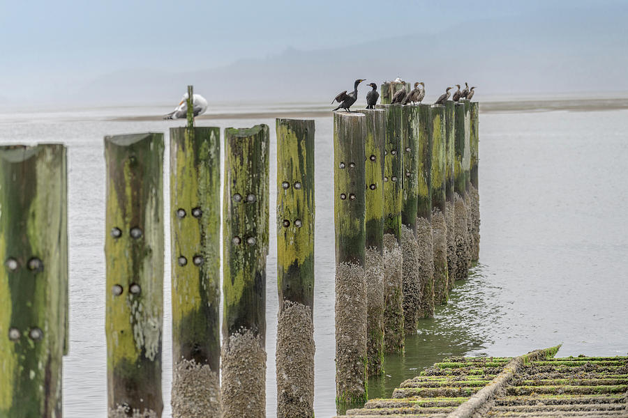 Boathouse Pilings by Johanna Froese
