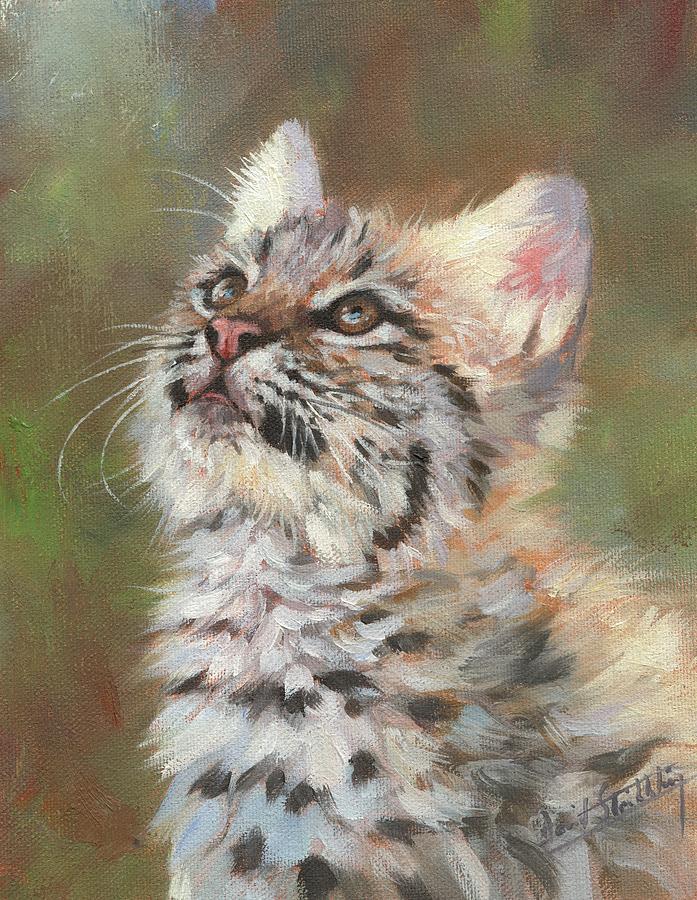 Bobcat Kitten by David Stribbling