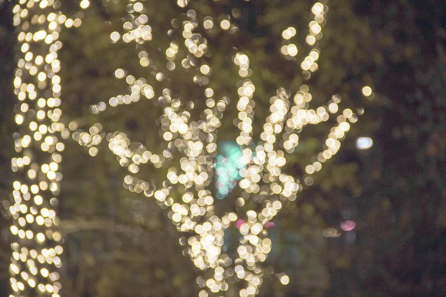 Bokeh Tree Lights by Amy Sorvillo