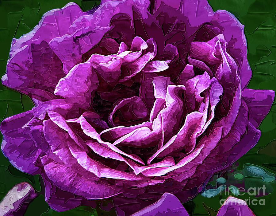 Bold Purple Rose Bloom by Kirt Tisdale