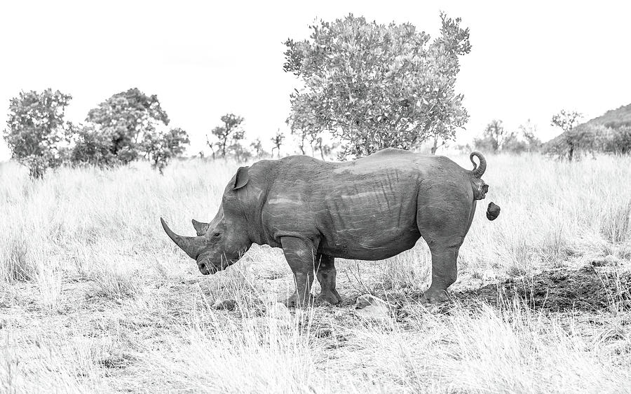 Rhino Photograph - Bombs Away by Hamish Mitchell