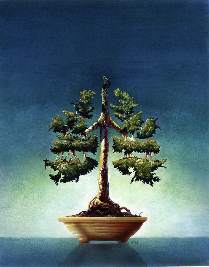 Bonsai Tree Painting By John Rowe