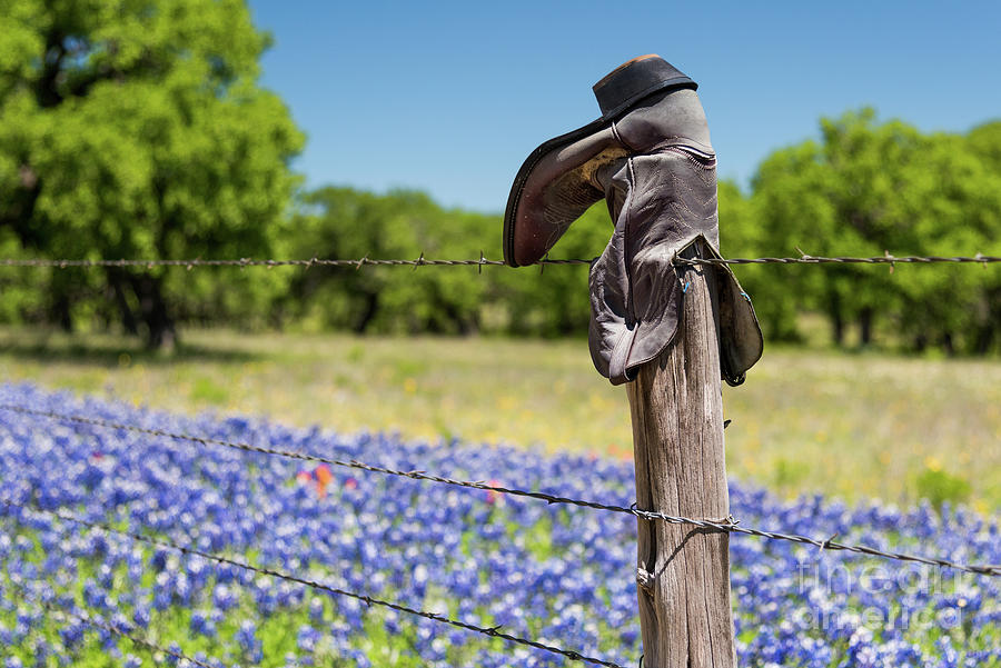 Boots and Bluebonnets by Paul Quinn