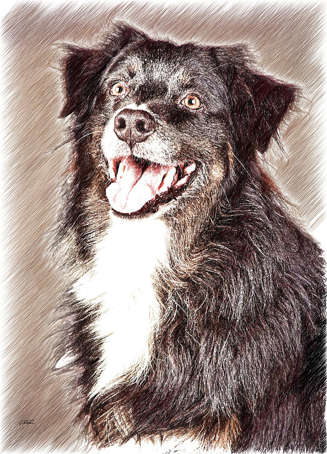 Border Collie - DWP220938 by Dean Wittle