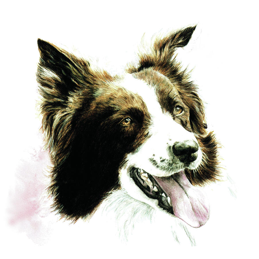 Border Collie by Patrice Clarkson