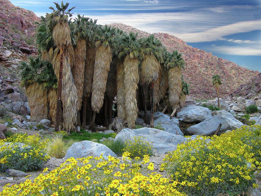 Borrego Palm Canyon In Anza-borrego Photograph by Sam Antonio Photography