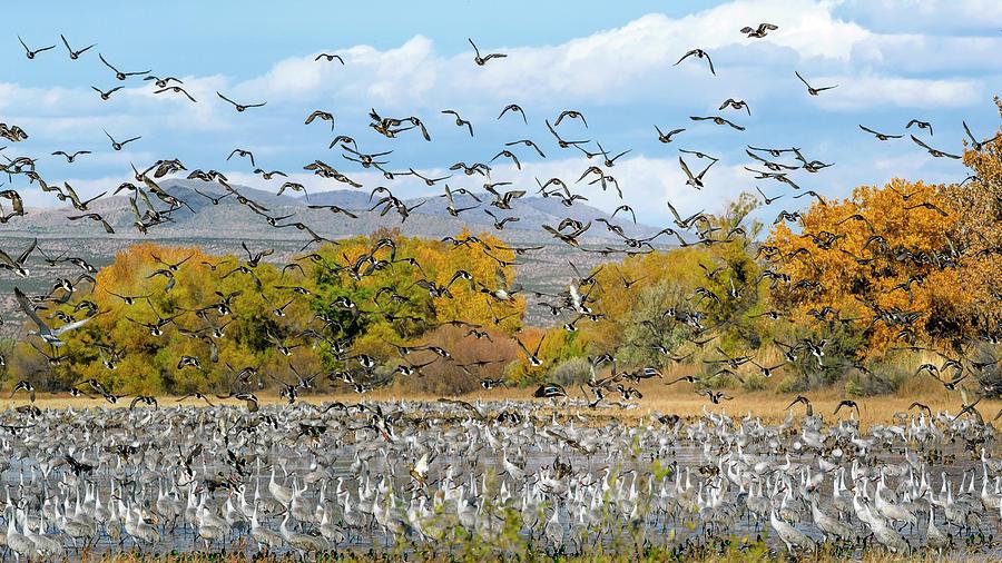 Bosque del Apache November by Van Sutherland