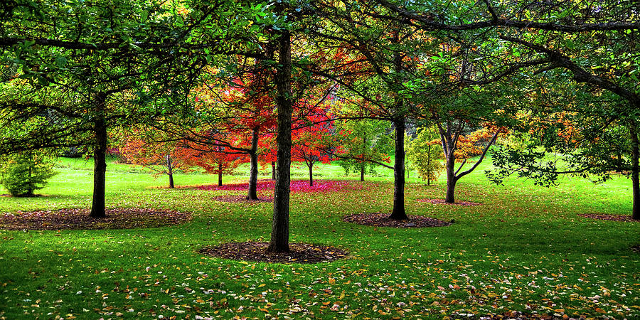 Botanical Canopy by David Patterson