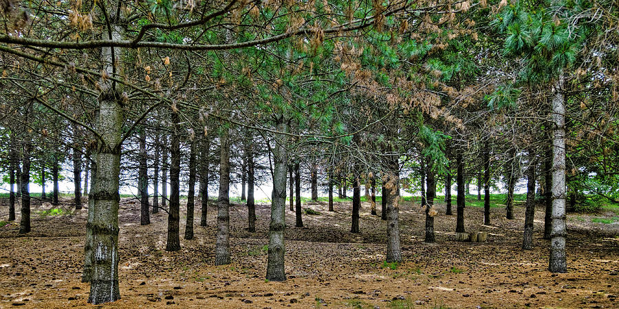 Botanical Trees by David Patterson