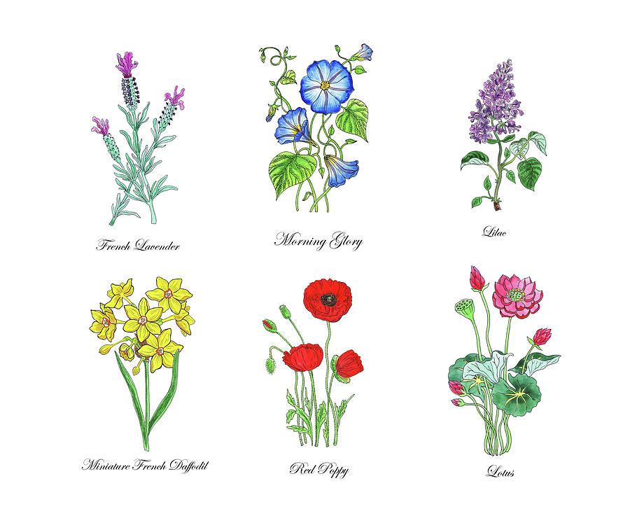 Botanical Watercolor Flowers Collection II by Irina Sztukowski
