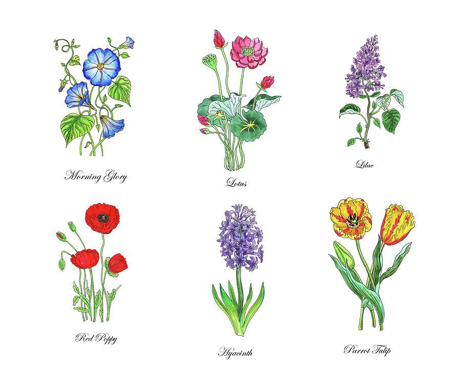 Botanical Watercolor Flowers Collection III by Irina Sztukowski