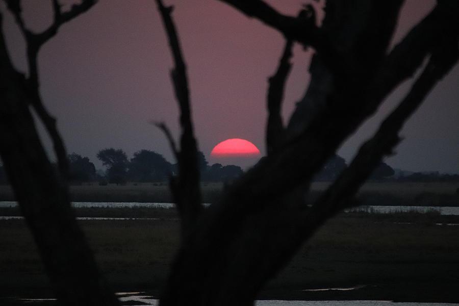 Botswana Sunset by Pat Moore