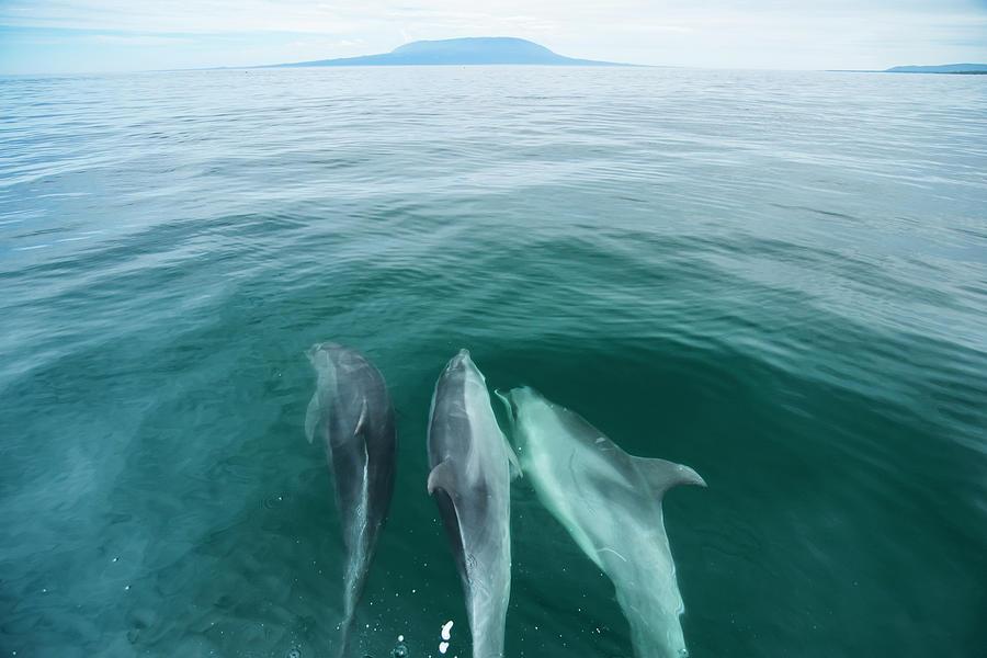Bottlenose Dolphins Bowriding Photograph by Tui De Roy