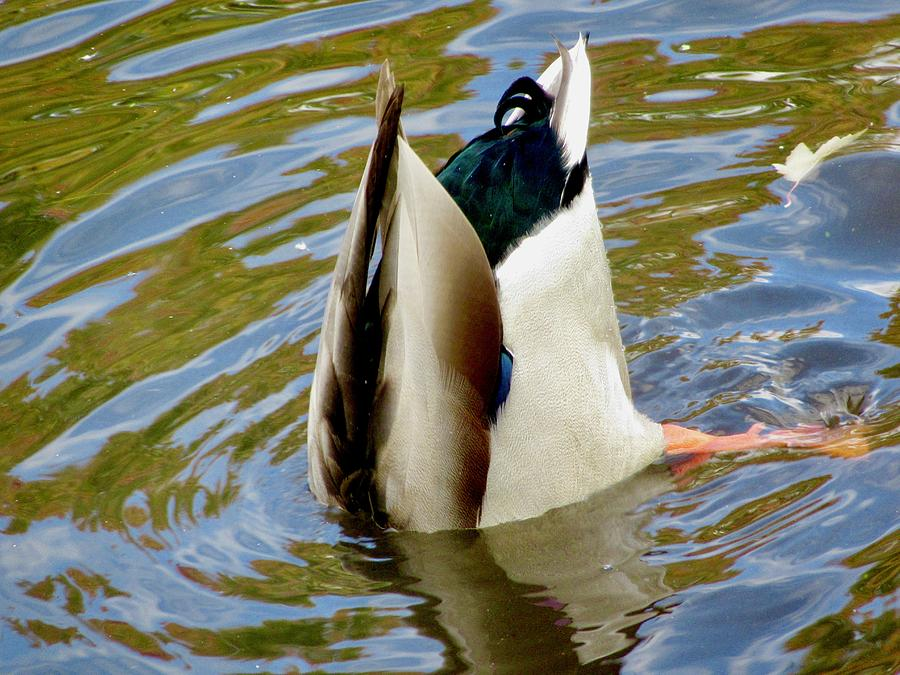 Bottoms Up by Stephanie Moore