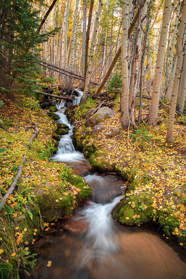 Boulder Brook Vertical by Aaron Spong