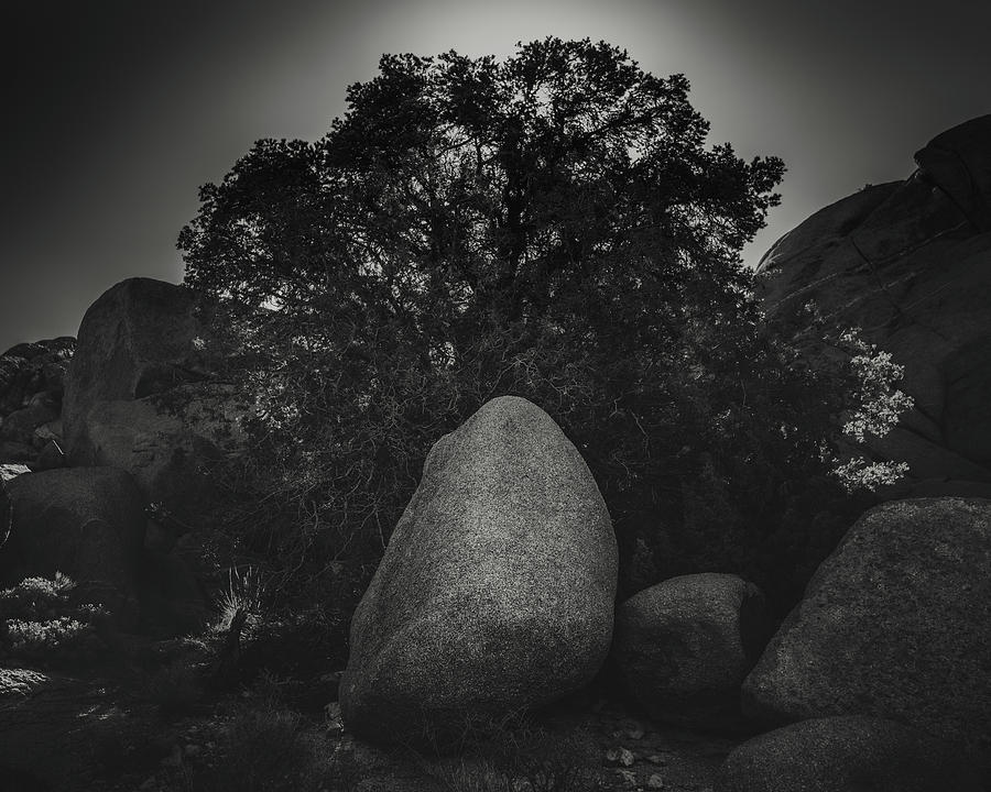 California Photograph - Boulder With Tree by Joseph Smith