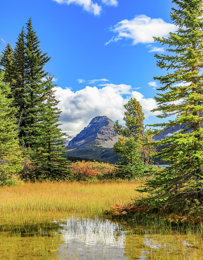 Bow Lake Autumn Reflection by Dan Sproul