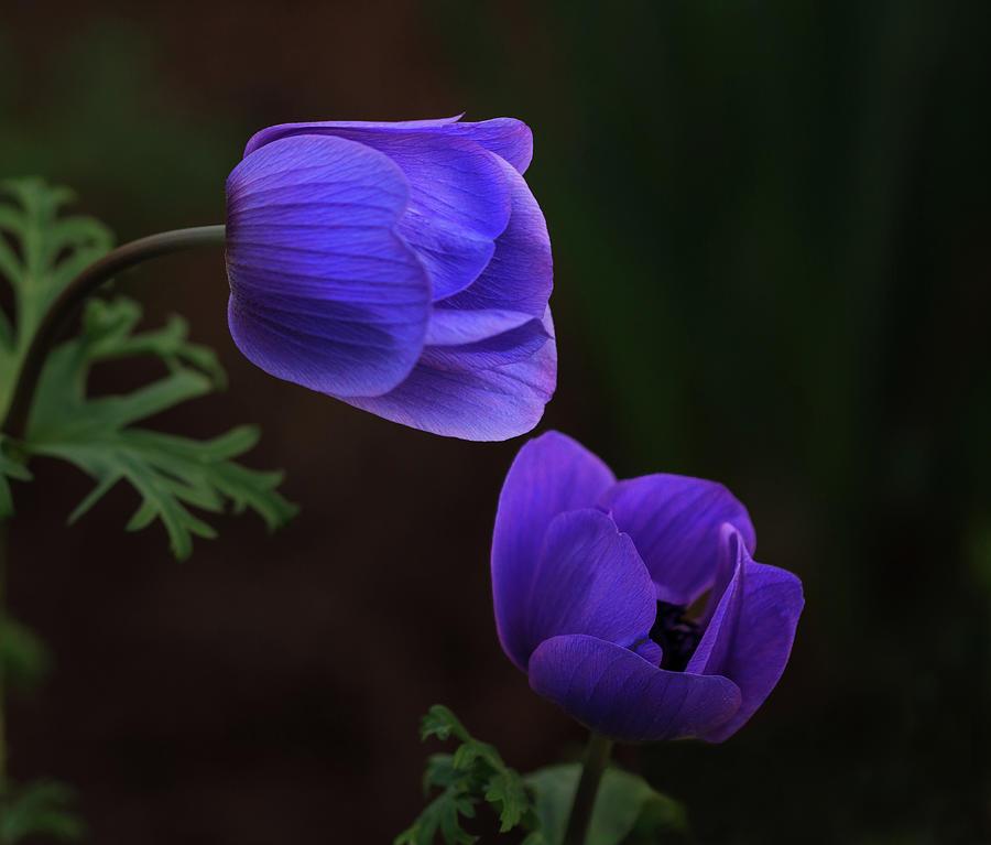 Bowing Blooms by Robert Pilkington