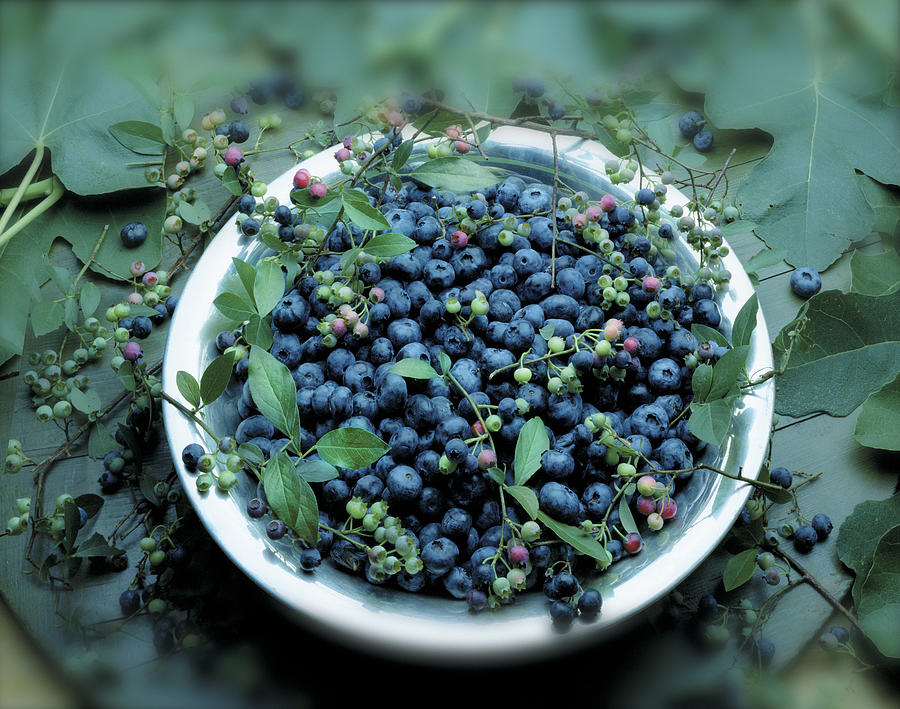 Bowl Of Blueberries Photograph by Atu Images