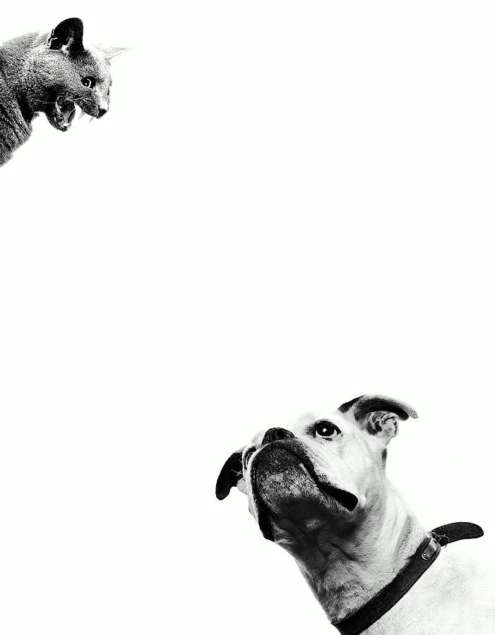 Boxer Dog Looking At Cat Above Head Photograph by Robert Daly