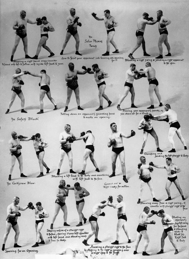 Boxing Moves Photograph by Reinhold Thiele
