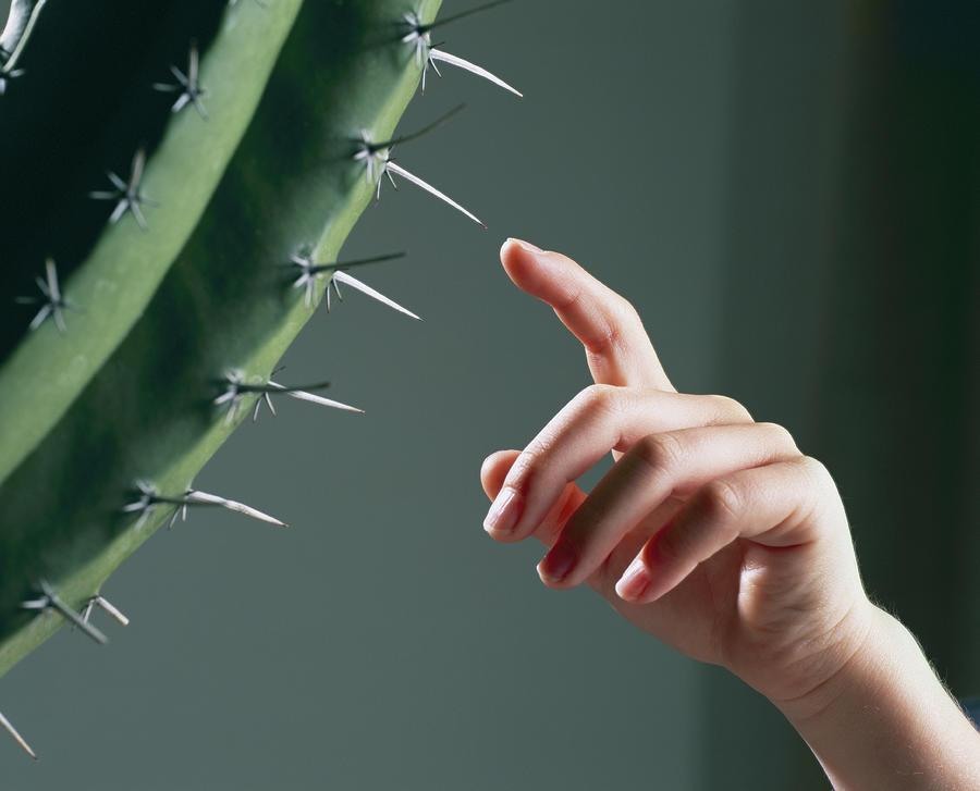 Человек кактус фото