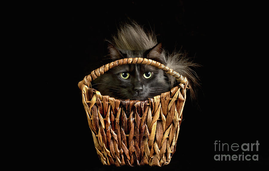 Boyfriend in a Basket by Susan Warren