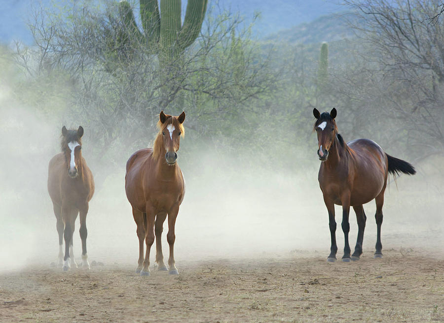 Stallions Are Back In Town by Barbara Sophia Travels