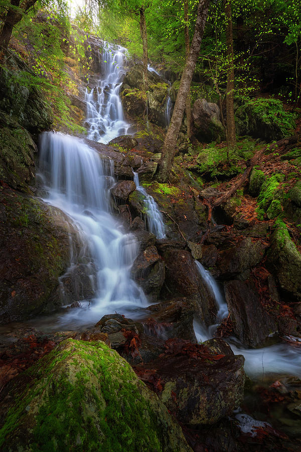 Brace Mountain Trail Falls by Bill Wakeley