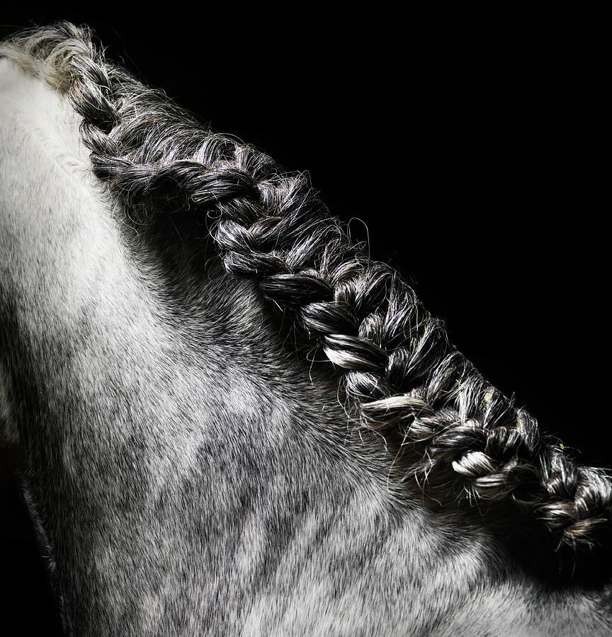 Braided Mane Of Grey Horse Photograph by Henrik Sorensen