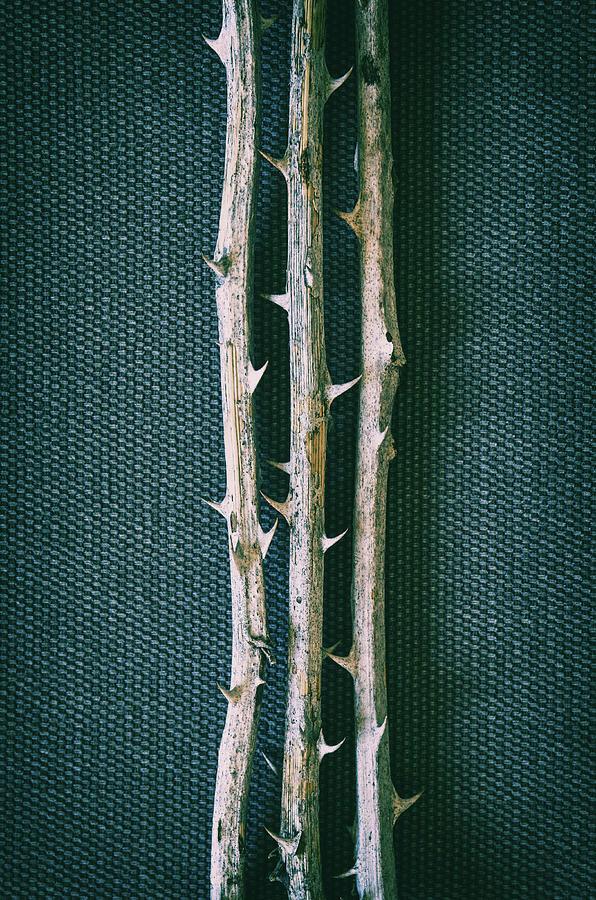 Bramble Thorns by Carlos Caetano