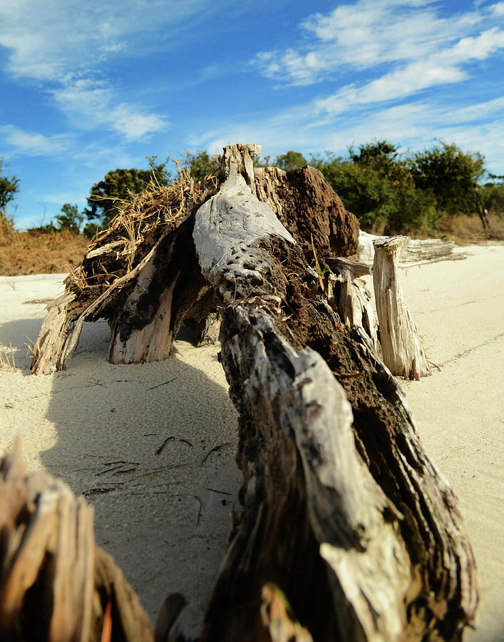 Branch on Beach by Maggy Marsh
