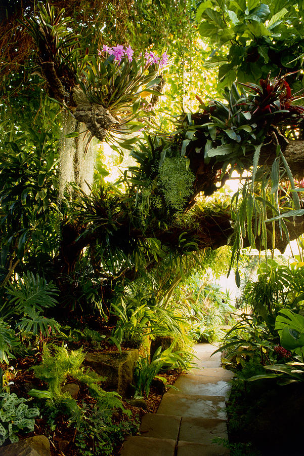Branches Laden With Epiphytes, Orchids Photograph by Richard Felber