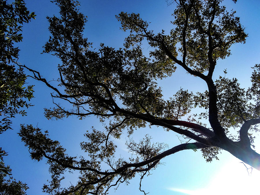 Branching In The Sky Photograph