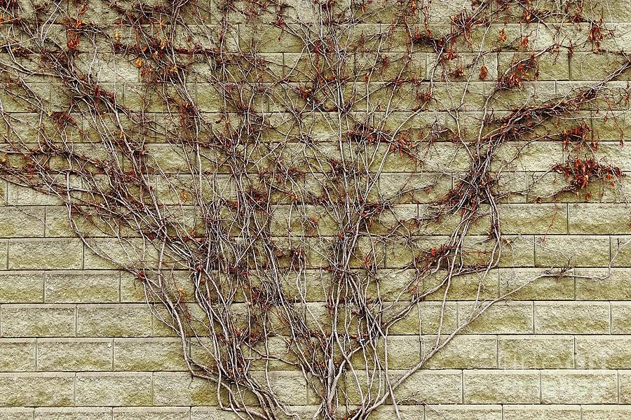 Branching Out by Bob Lentz